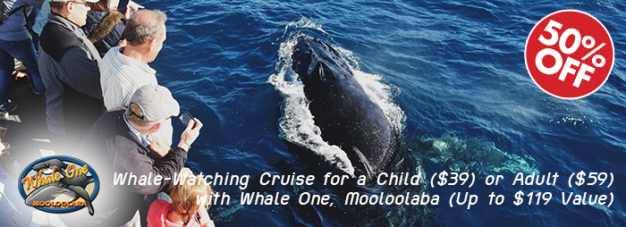 Whale-Watching Cruise for a Child ($39) or Adult ($59) with Whale One, Mooloolaba