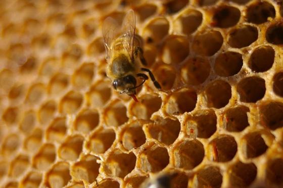 นมผึ้ง Royal Jelly คืออะไร สรรพคุณและประโยชน์